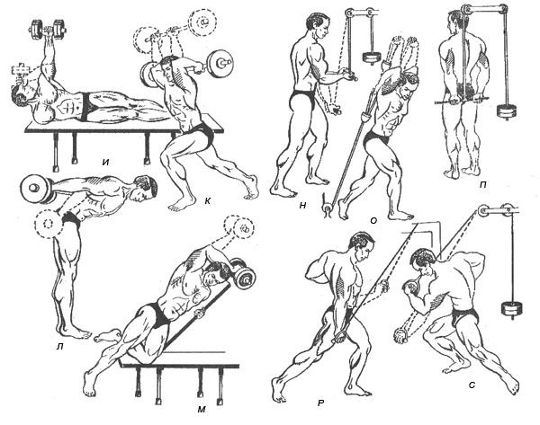 комплекс упражнений на трицепс Личная страничка героя