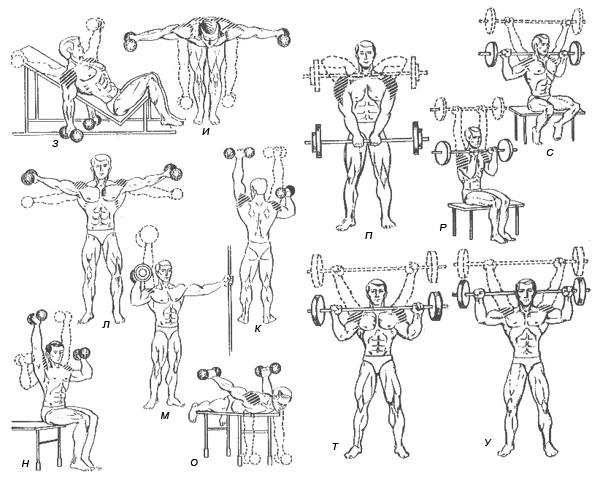 Упражнения для дельтовидной мышцы в домашних условиях 229