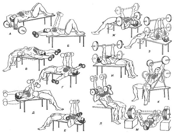 Упражнения мышц грудной клетки домашних условиях